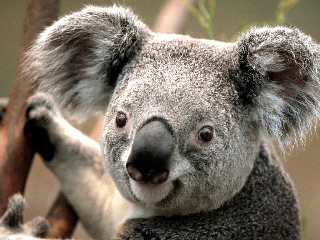http://www.cmps.hlc.edu.tw/uploads/tadgallery/2009_03_12/13_Koala.jpg Photo Test.