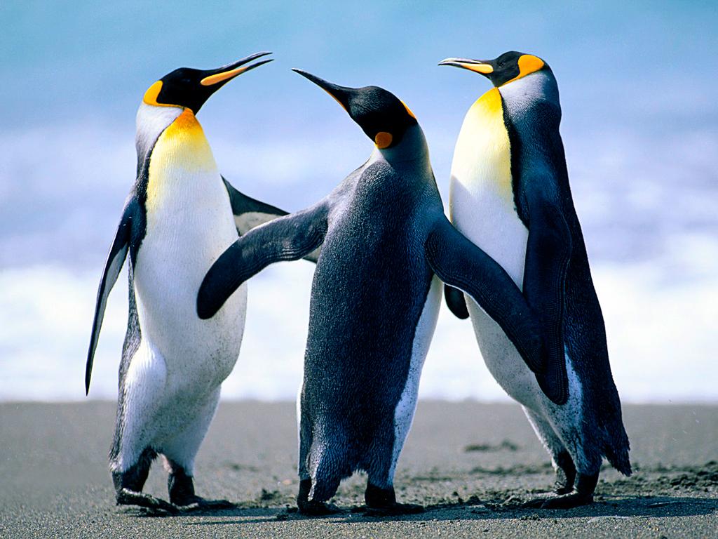 http://www.cmps.hlc.edu.tw/uploads/tadgallery/2009_03_12/7_Penguins.jpg Photo Test.
